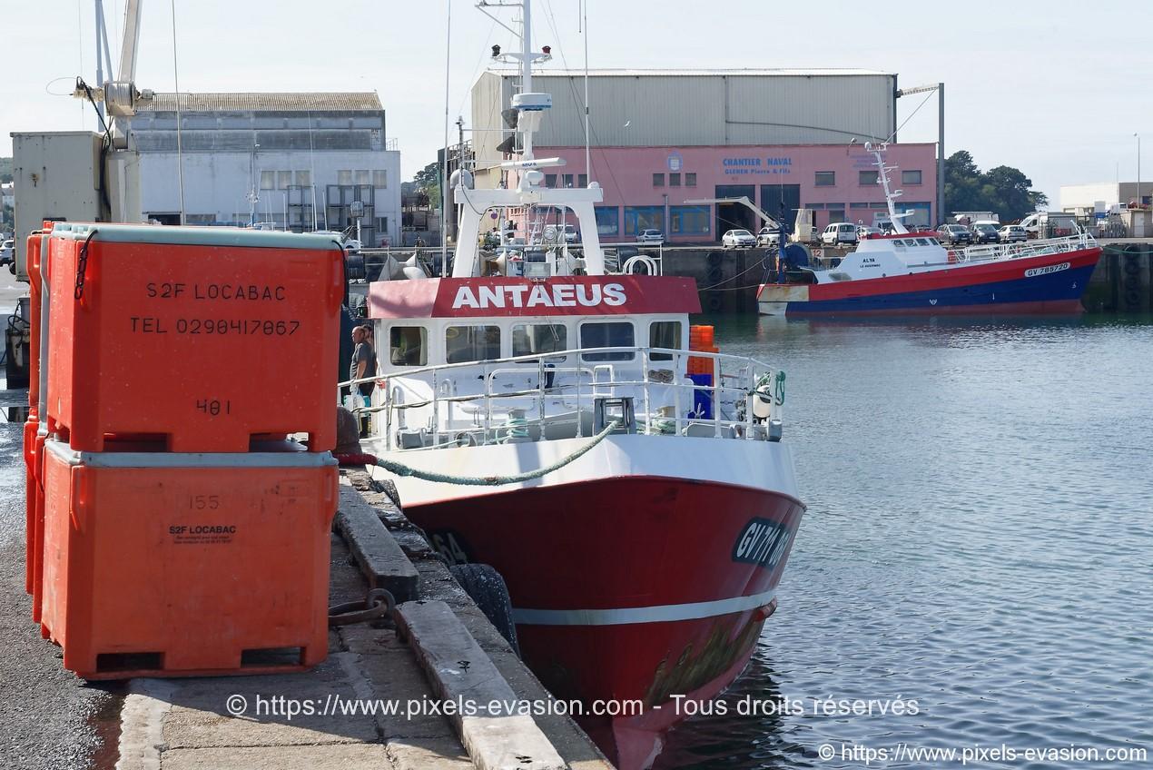 Antaeus (GV 711864)