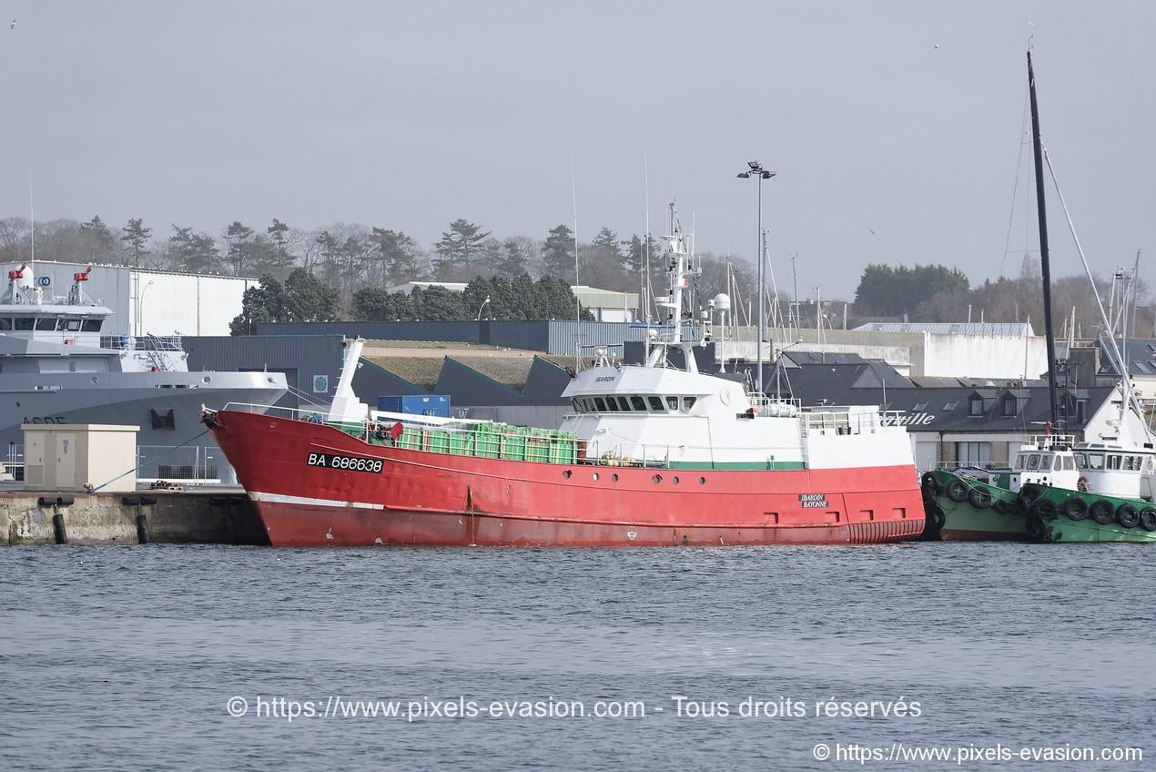 Ibardin (BA 686638)