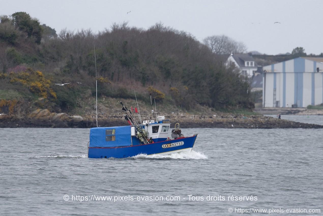 Beluga (LO 492732)
