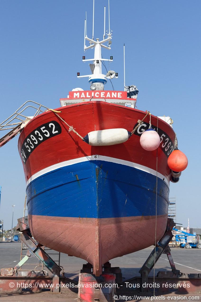 Maliceane (GV 539352)