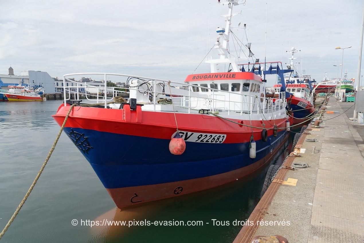 Bougainville (GV 922683)