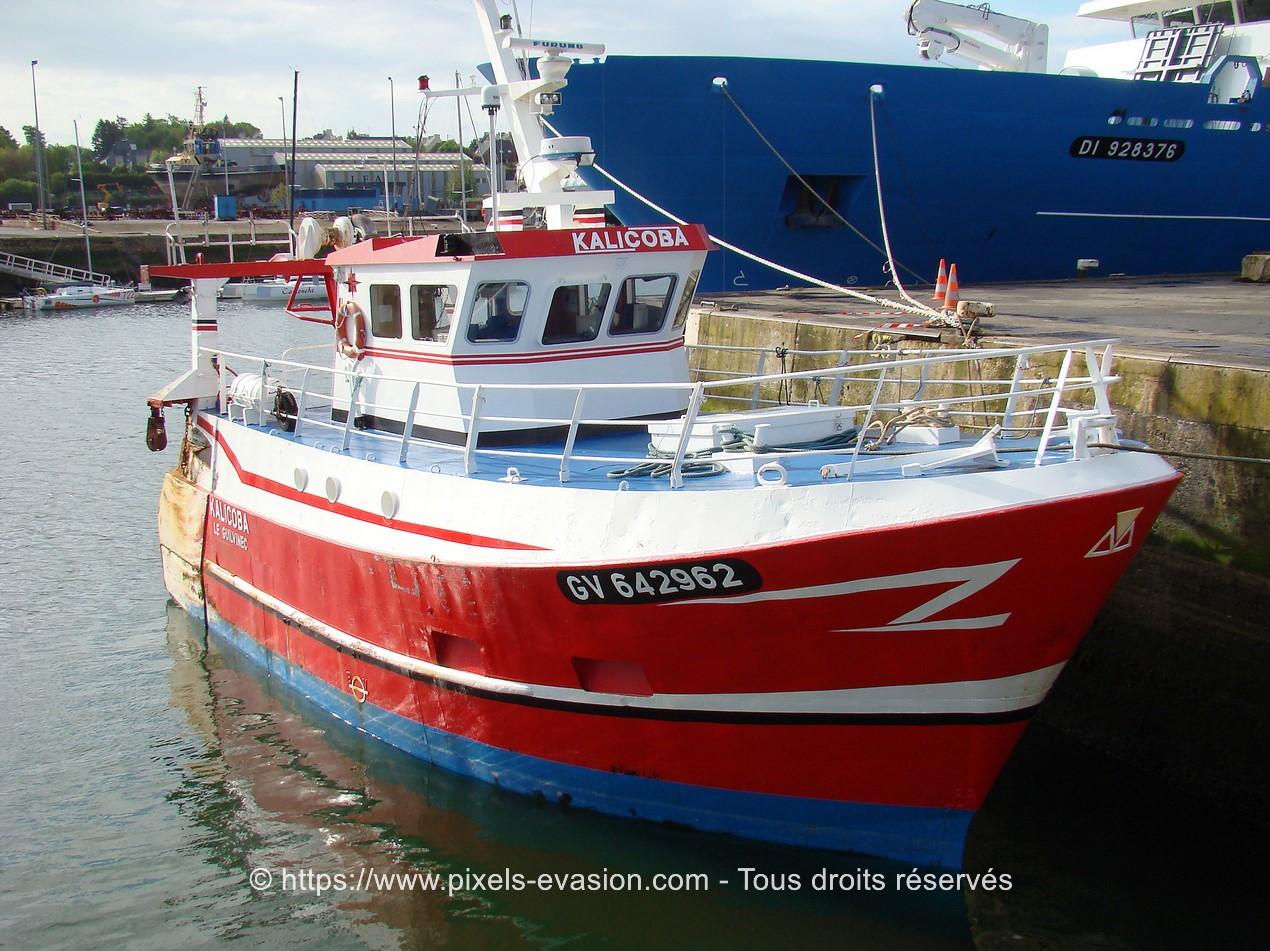 Kalicoba (GV 642962)
