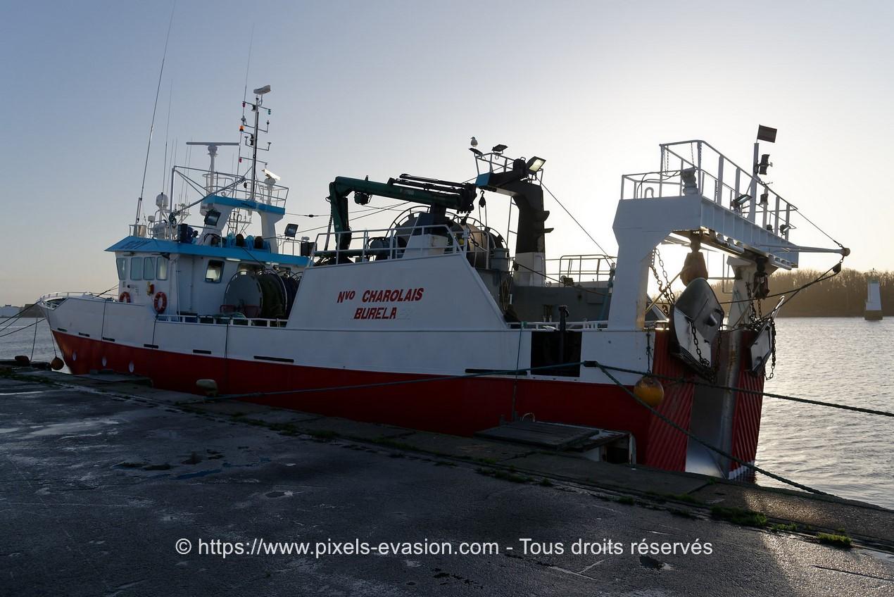 Nuevo Charolais (Burela)
