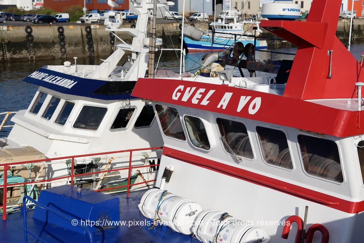Gwel A Vo (GV 642407)