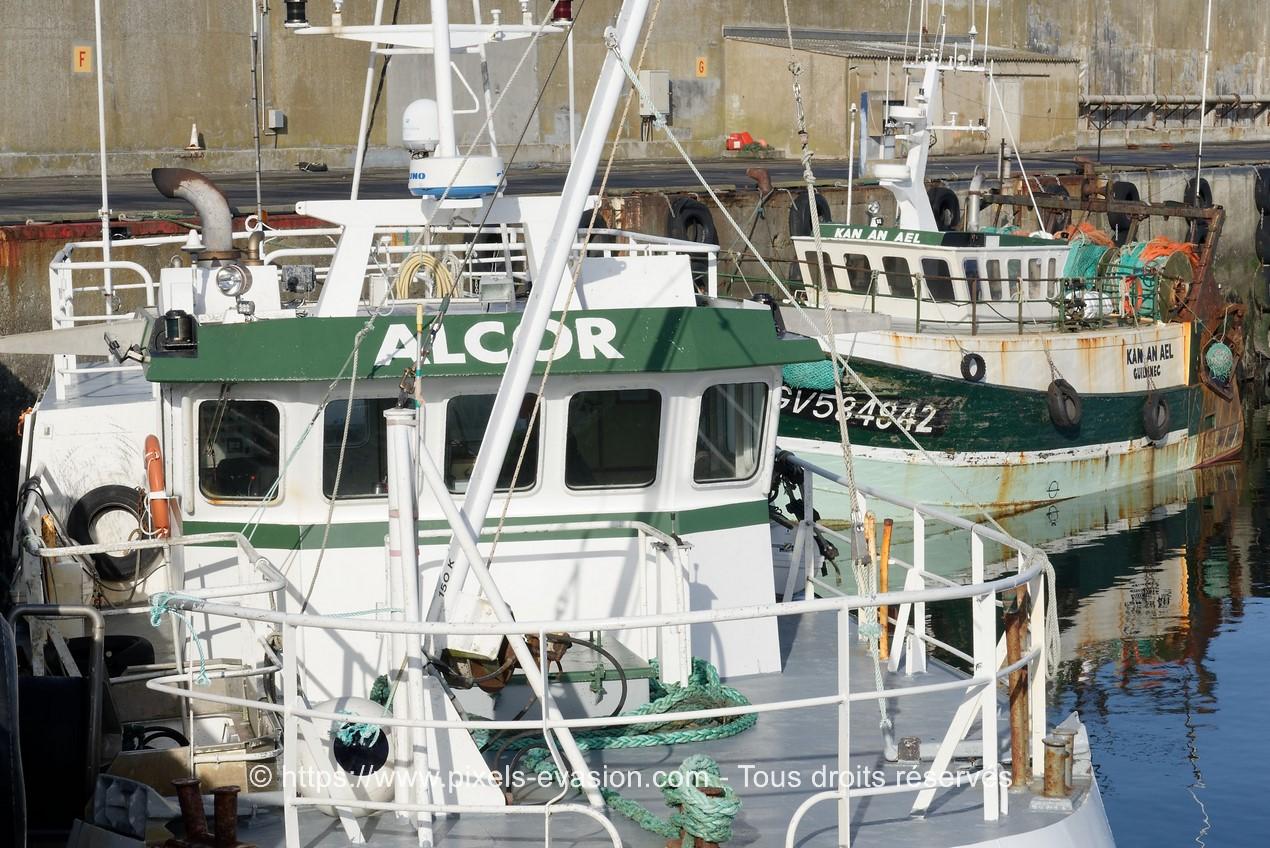 Alcor (GV 898466)