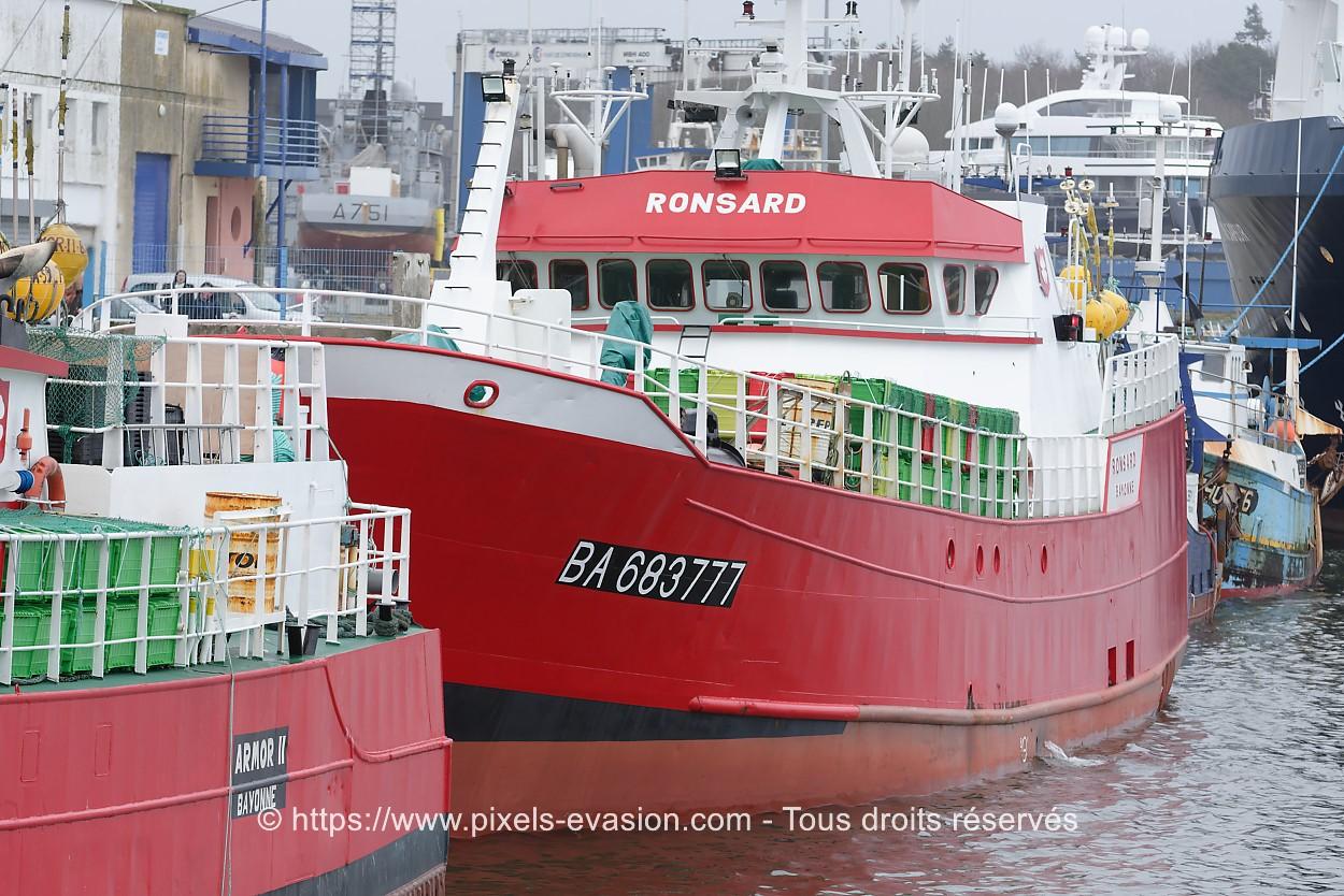 Ronsard BA 683777