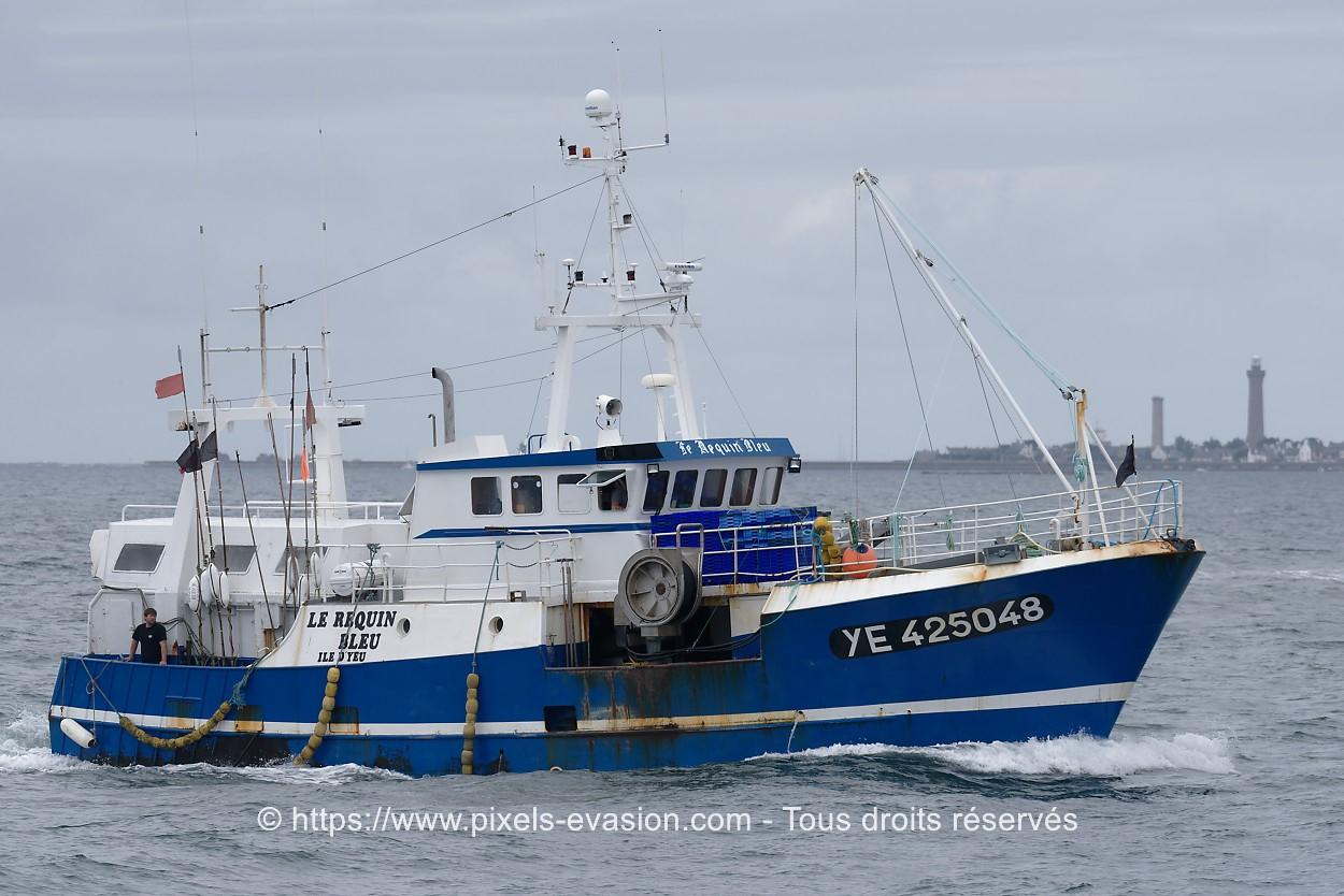 Le Requin Bleu YE 425048