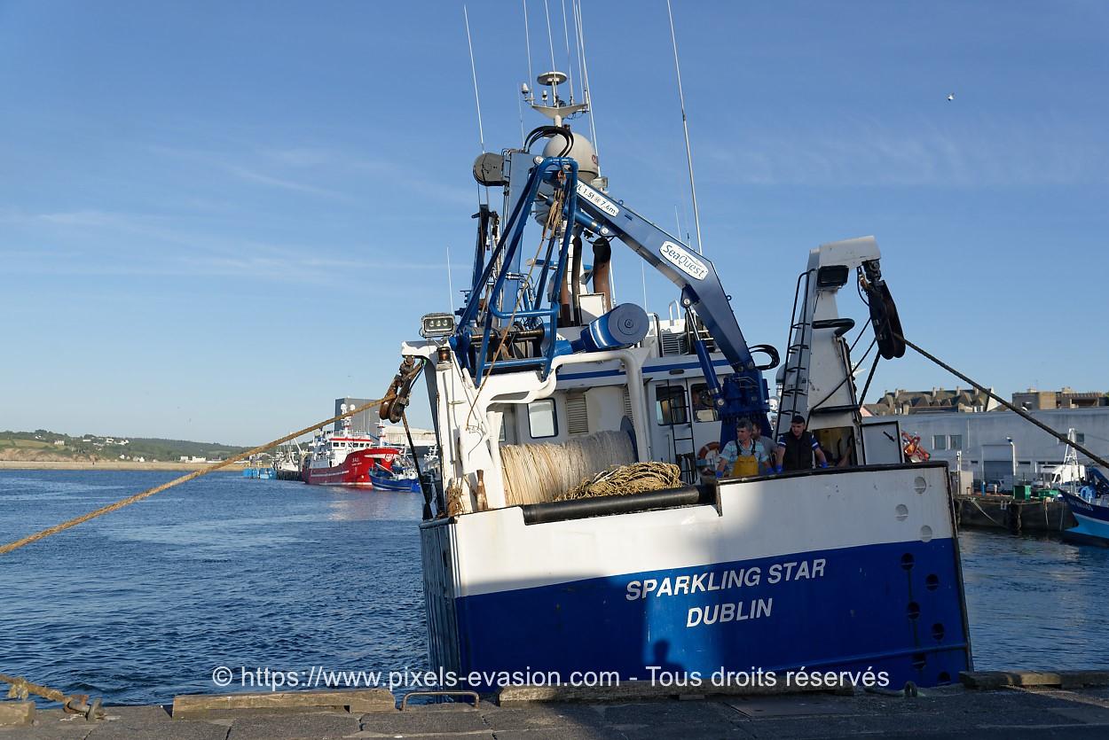 Sparkling Star D437