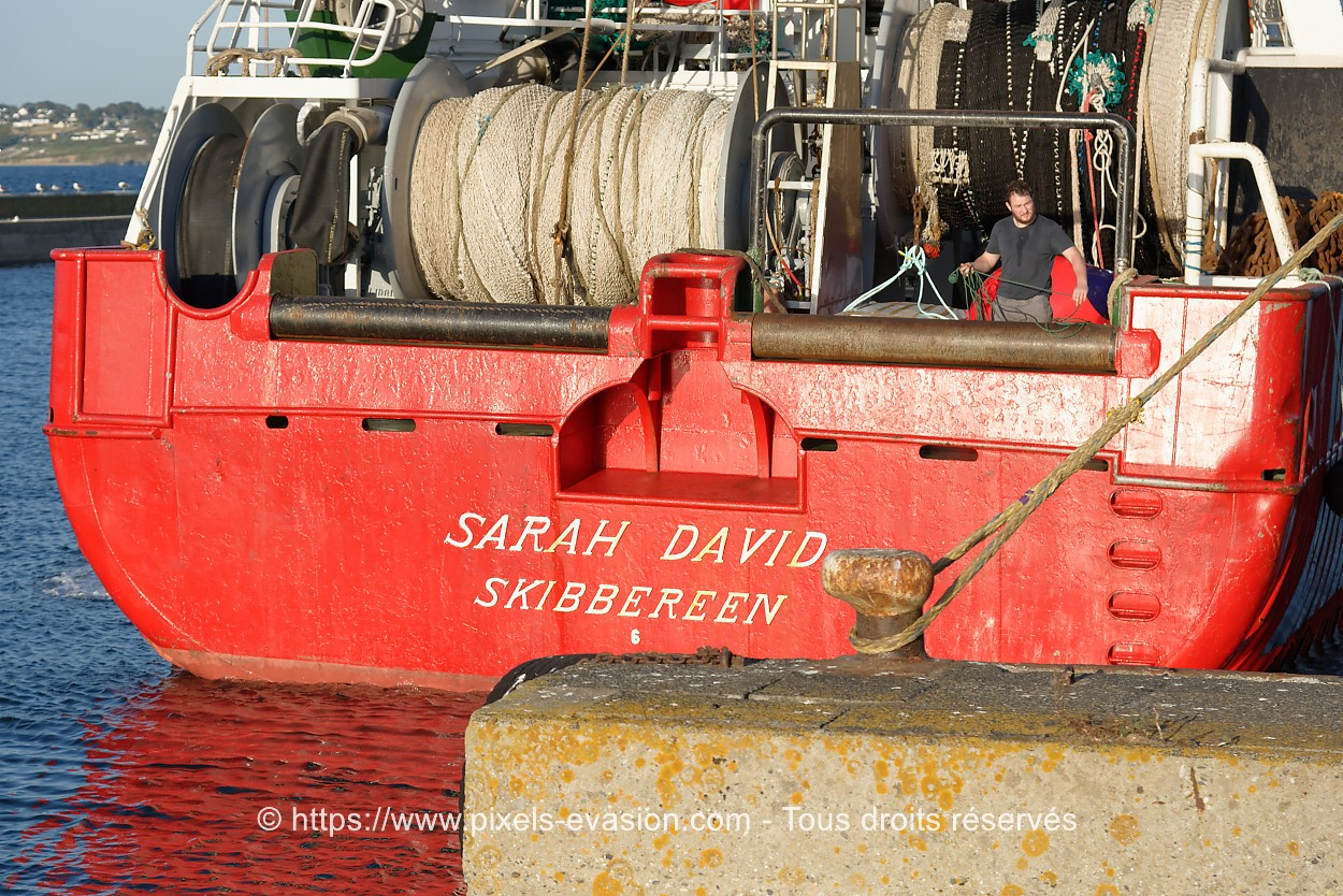 Sarah David S411
