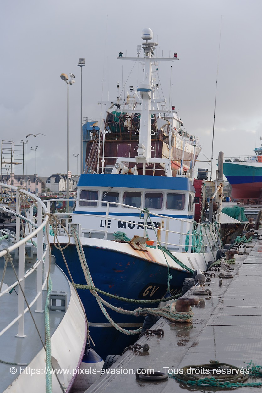 Le Murex GV 730812
