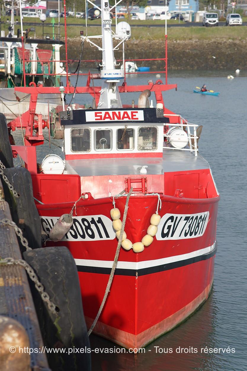 Sanae GV 730811