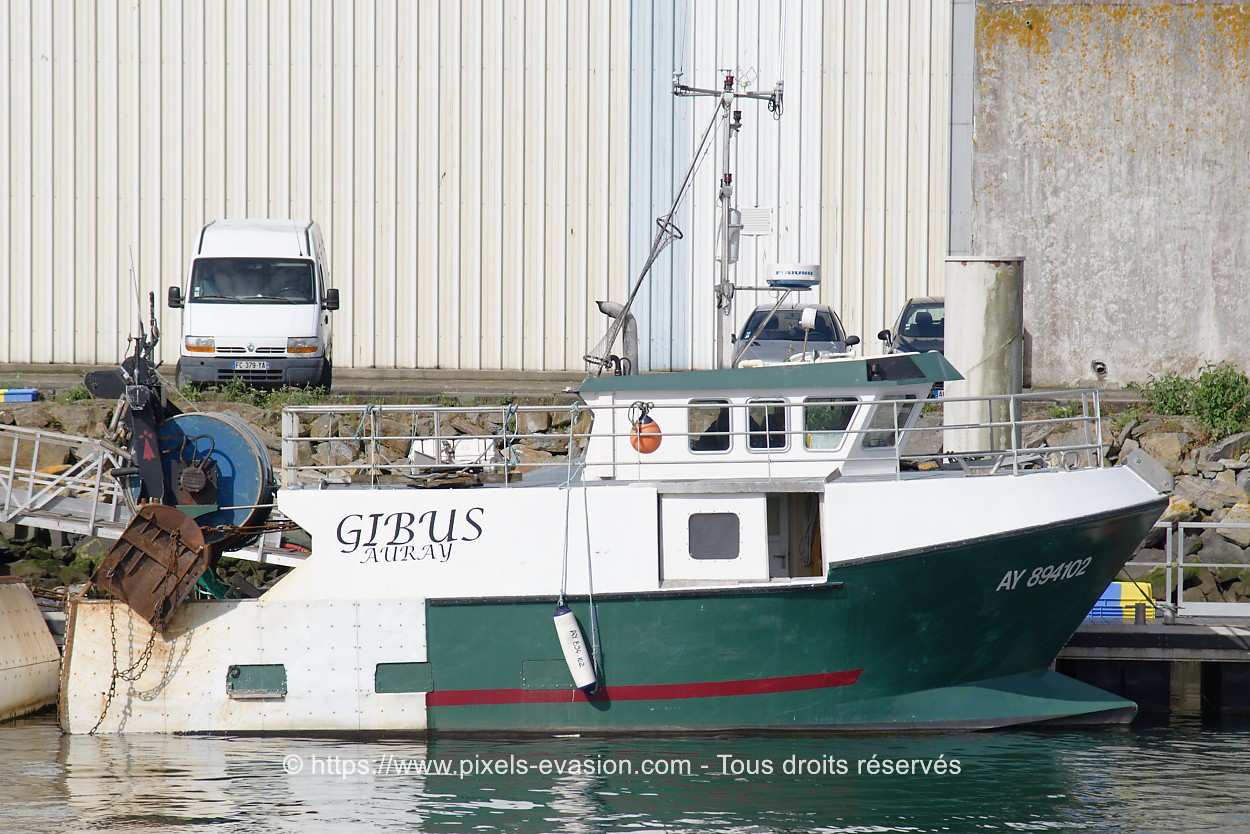 Gibus AY 894102