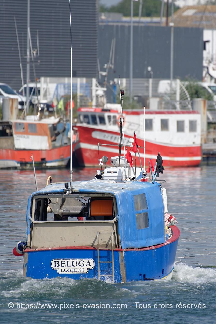 Beluga LO 492732